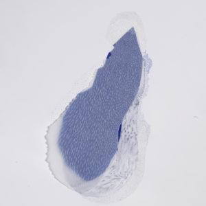 sabatina leccia alix waline - nucleus